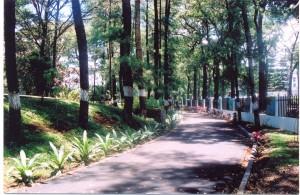 taman1
